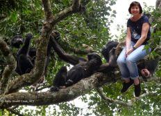 Pat au pays des bonobos
