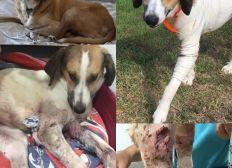SOS - Aidez le Refuge de Caldaniccia à régler ses frais vétérinaires