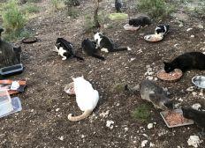 Solidarité de chats des rues