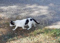Les chats de Tavel Sud