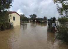 Inondation association de chevaux