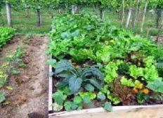 Aide a monter son entreprise de permaculture