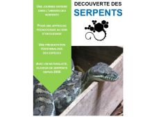 """""""Black Scales"""", élevage de sensibilisation aux serpents."""