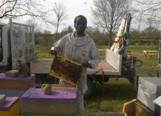 Des ruches au Faso