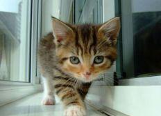 solidarite medicale pour mon chat titou svp il a besoin d un vaccin