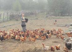 Sauvons les poules rebelles
