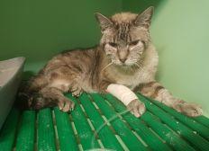 URGENT : Lourdes dettes vétérinaires