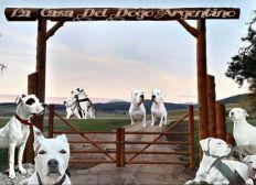 Groupe D'entraide La Casa Del Dogo Argentino