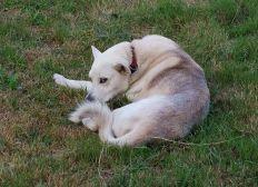 Por un tratamiento adecuado para los perros mayores, diagnostiquemos a Bandido.