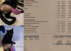 Aide frais vétérinaire suite a l'accident de mon chat monster Tomber du 5ieme étage