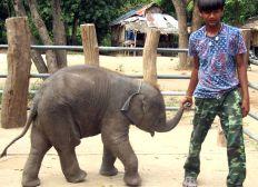 UN ELEPHANT POUR MIKE