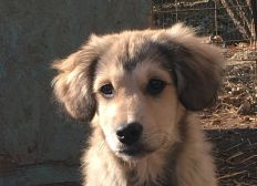 Hilfe für Citydogs4Streetdogs