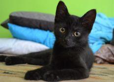 SOS - Aidez notre association à stériliser et nourrir les chats errants