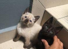 Soins pour 2 chatons errants