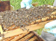 Des ruches à Rouvroy