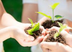 le concours de l'environnement pour le quartier le plus propre de Mechtras