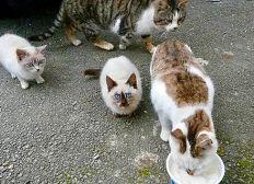 Pour continuer à soigner les chats de mon village