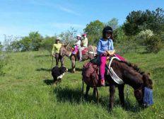 Parcours à la découverte de l'environnement avec des ânes