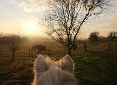 Une ferme Equestre Bio en Alsace