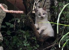 Financer la stérilisation des chats errants