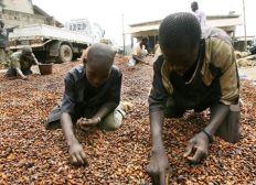 Soutien aux enfants esclaves dans les plantations de cacao en Côte d'Ivoire