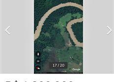 REFORESTATION AMAZONIE