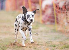 Kompetenzhund Ausbildung für Lucky