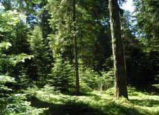 Dynamisons une forêt en Auvergne !