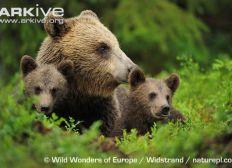Voyage d'étude: médiation sur le cas de l'ours en Ariège