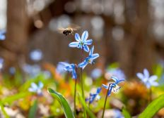 Nature Participative - La cagnotte du soutien pour la nature et la biodiversité