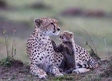 """Soutenez Nico dans la création du """"Nature Experience Safari"""""""