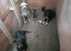 Adecuación de instalaciones para el hospedaje de los animales rescatados