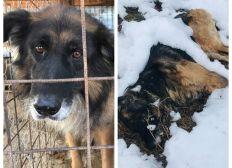 Une semaine pour aider 70 chiens de la fourrière de Târgu Frumos
