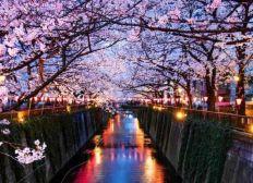Rêve voyage au Japon