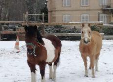 Sauvetage des poneys et chevaux du Centre Equestre d'Obernai