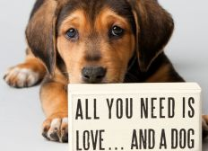 'Love Dogs Home' for Rescued Dogs in Canary Islands
