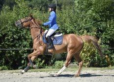 Equitation Paris 2024