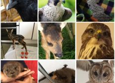 Barbara's Wildlife Rescue SC048165