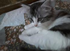 Don pour association de protection féline Heden cats paradise