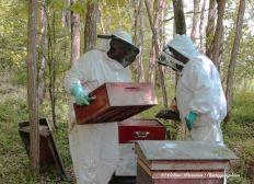 Sauvez les abeilles !