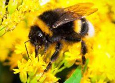 Blumenwiese für Bienen Hummeln und Schmetterlinge