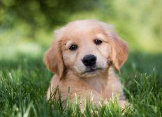 My dream dog