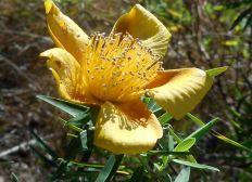 Soutenez Fleurs Jaunes, producteur de plantes médicinales de la Réunion