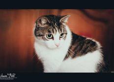 Pour les soins vétérinaires de Titeuf