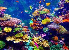 Projet documentaire sur les fonds marins