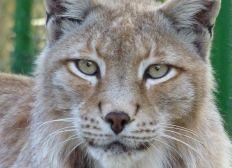 Parc animalier de Toulon: création d'une aire de jeux pour les lynx!