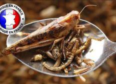 Je mange des insectes : Ferme d'insectes