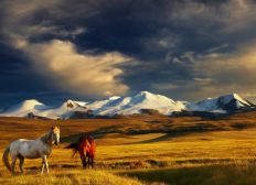 Trois mois en Mongolie