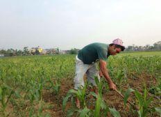 Aidons à la création d'une ferme responsable au Népal