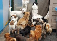 Tierschutz Hundeauffangstation